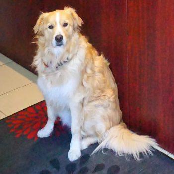 Ollie - Dog